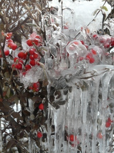 Frozen Berries at Christmas